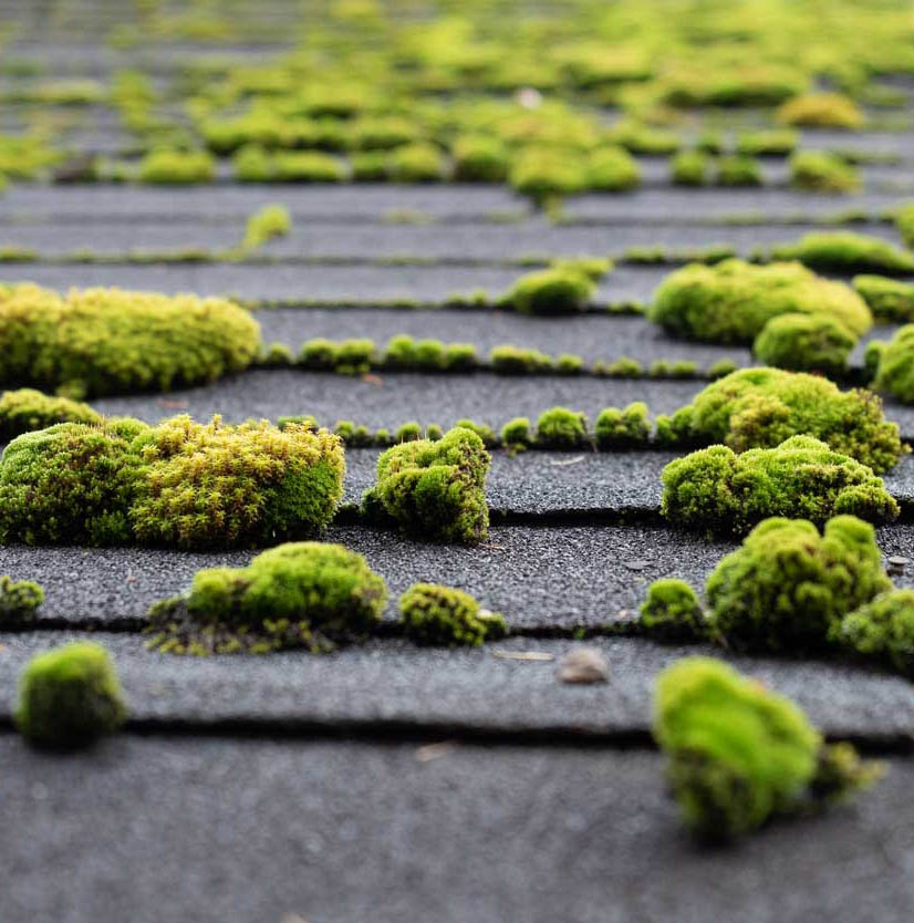 moss removal seattle