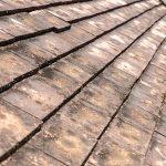 roof algae removal seattle